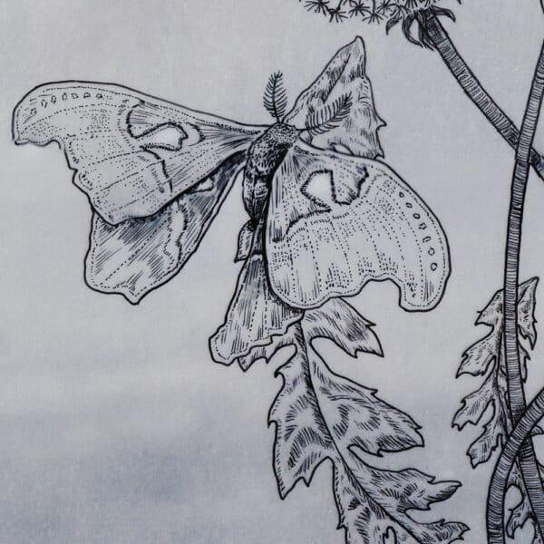 Paardenbloem Nachtvlinder Dandelion Herbalism Solawende Illustration