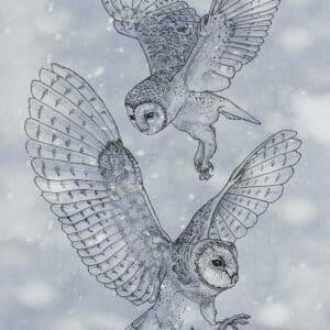Owls Kerkuil Solawende Illustration