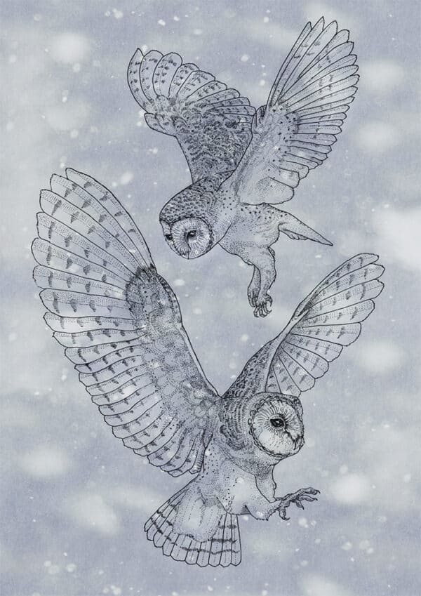 Owls Kerkuil Solawende Illustration